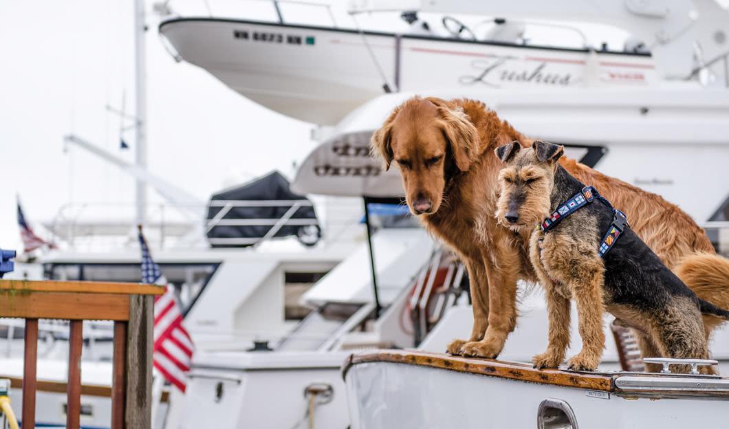 Rettungswesten für Hunde