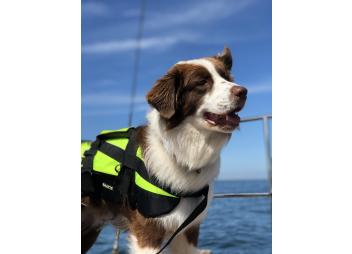 Hunde-Rettungsweste PROFESSIONAL