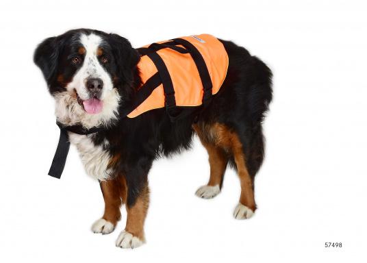 Salvagente per cane