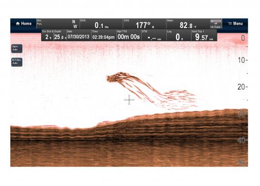 """Weitblick unter Wasser - Sehen Sie """"echte"""" Unterwasserwelt unter Ihrem Boot mit der CHIRP DownVision™Technologie von Raymarine.  (Bild 10 von 16)"""