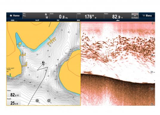 """Weitblick unter Wasser - Sehen Sie """"echte"""" Unterwasserwelt unter Ihrem Boot mit der CHIRP DownVision™Technologie von Raymarine.  (Bild 6 von 16)"""